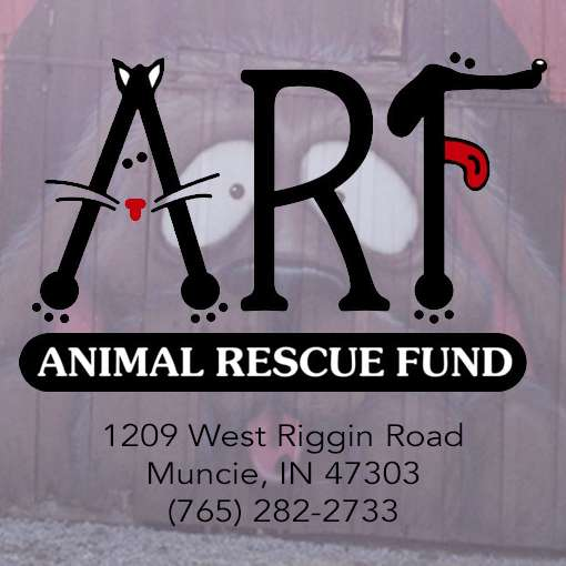 Meow Market at Animal Rescue Fund